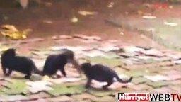 Крыса против четырёх котов смотреть видео прикол - 1:31