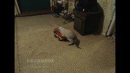 Котёнок-гонщик смотреть видео прикол - 0:52