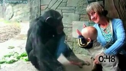 Смотреть Животные против детей в зоопарке