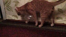 Кот и статическое электричество смотреть видео прикол - 2:59