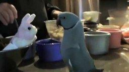 Смотреть Попугай общается с мягкой игрушкой