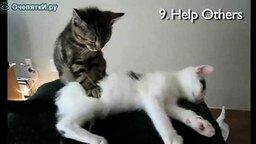 Новогодние кошки смотреть видео прикол - 1:03