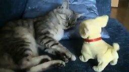 Вставай, кот! смотреть видео прикол - 1:23