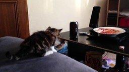 Напористый котёнок смотреть видео прикол - 0:25