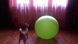 Как достать игрушку с гимнастического мяча смотреть видео прикол - 0:30