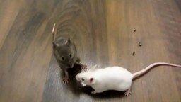 Смотреть Умненькие мышки