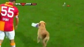 Смотреть Два щенка на футбольном поле