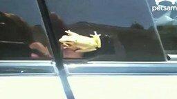 Ужастик с лягушкой смотреть видео прикол - 0:34
