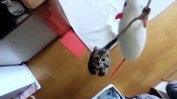 Прыгучий котяра смотреть видео прикол - 1:08