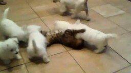 Щенки напали на кота смотреть видео прикол - 0:40