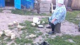 Бабушка из деревни строит уток смотреть видео прикол - 0:28