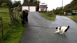 Смотреть Собака выгуливает лошадь