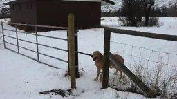 Смотреть Глупенький пёс с палкой