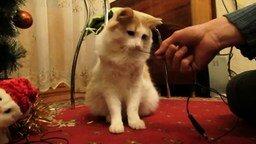 Смотреть Кот зачищает провода