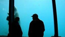 Медведь разбил стекло смотреть видео прикол - 1:06