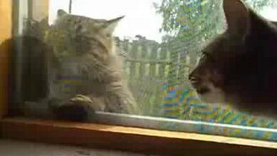 Смотреть Два кота беседуют