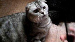 Расчёска и кот смотреть видео прикол - 0:41