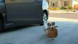 Собака-удивляка смотреть видео прикол - 3:45