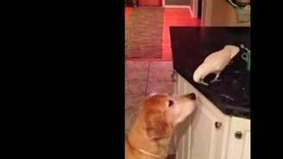 Смотреть Добрый попугай кормит другана