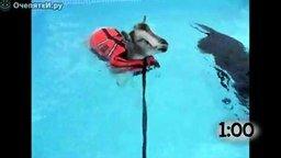 Подборка животных в бассейне смотреть видео прикол - 1:10