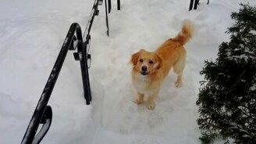Смотреть Пёс радуется прогулке в сугробах