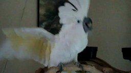 Смотреть Леди Гага и попугай