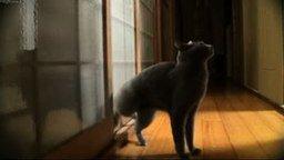Смотреть Кот просится войти задней левой