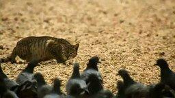Кот-охотник смотреть видео прикол - 1:27