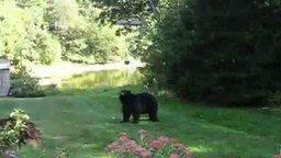 Женщина прогонет медведя