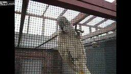 Попугай мяукает смотреть видео прикол - 0:57