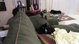 Кот против енота смотреть видео прикол - 1:37