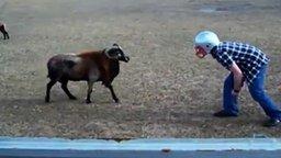 Смотреть Баран в каске против барана с рогами
