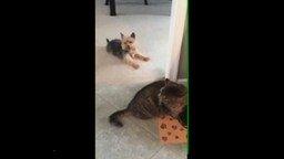 Отвлекающий манёвр для кота смотреть видео прикол - 0:22