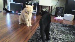 Короткая битва котов смотреть видео прикол - 0:27