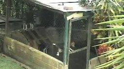 Эпичный побег пса из вольера смотреть видео прикол - 1:49