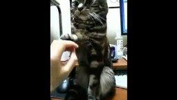 Кошка, которой надоела ласка смотреть видео прикол - 0:30