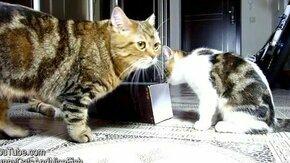 Смотреть Котята резвятся с коробкой