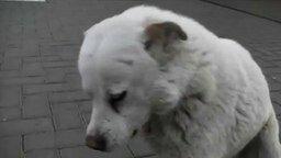 Сверхдобрая собака смотреть видео прикол - 3:38