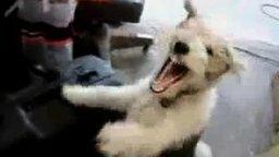 Смотреть Собака против гелия