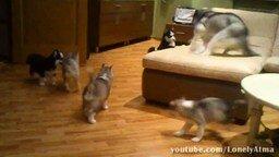 Смотреть Смешные приколы с животными