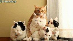 Пирамида из кошек смотреть видео прикол - 0:32