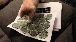 Смотреть Реакция котёнка на иллюзию