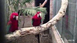 Смотреть Смешные ролики с разными животными