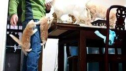 Смотреть Бешеные голодные котята