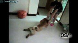 Животные, которые не любят купаться смотреть видео прикол - 1:11