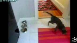 Неудачные прыжки котов смотреть видео прикол - 2:18