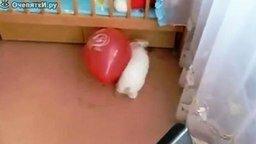 Кролик испугался смотреть видео прикол - 0:16