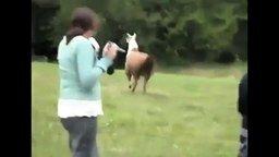 Животные атакуют людей смотреть видео прикол - 2:55