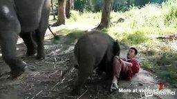 Смотреть Милый и нежный слонёнок