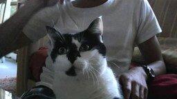 Кошка-скрипка смотреть видео прикол - 0:46